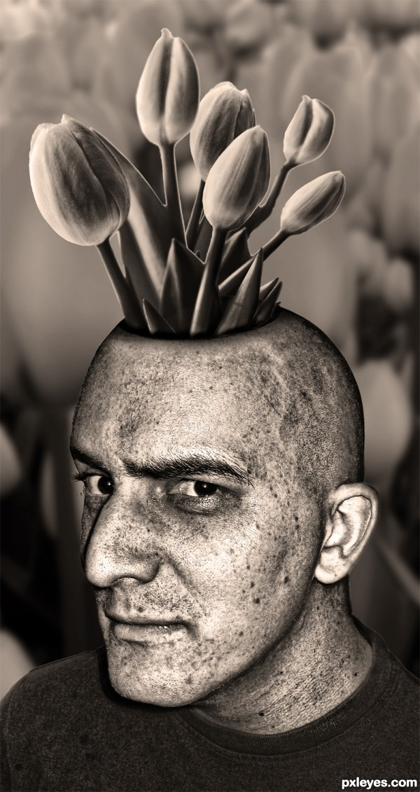 Tulips in my Head