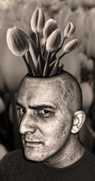 TulipsinmyHead