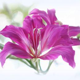 FlowerBlowOut