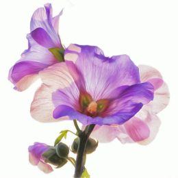 FloralBlowOut