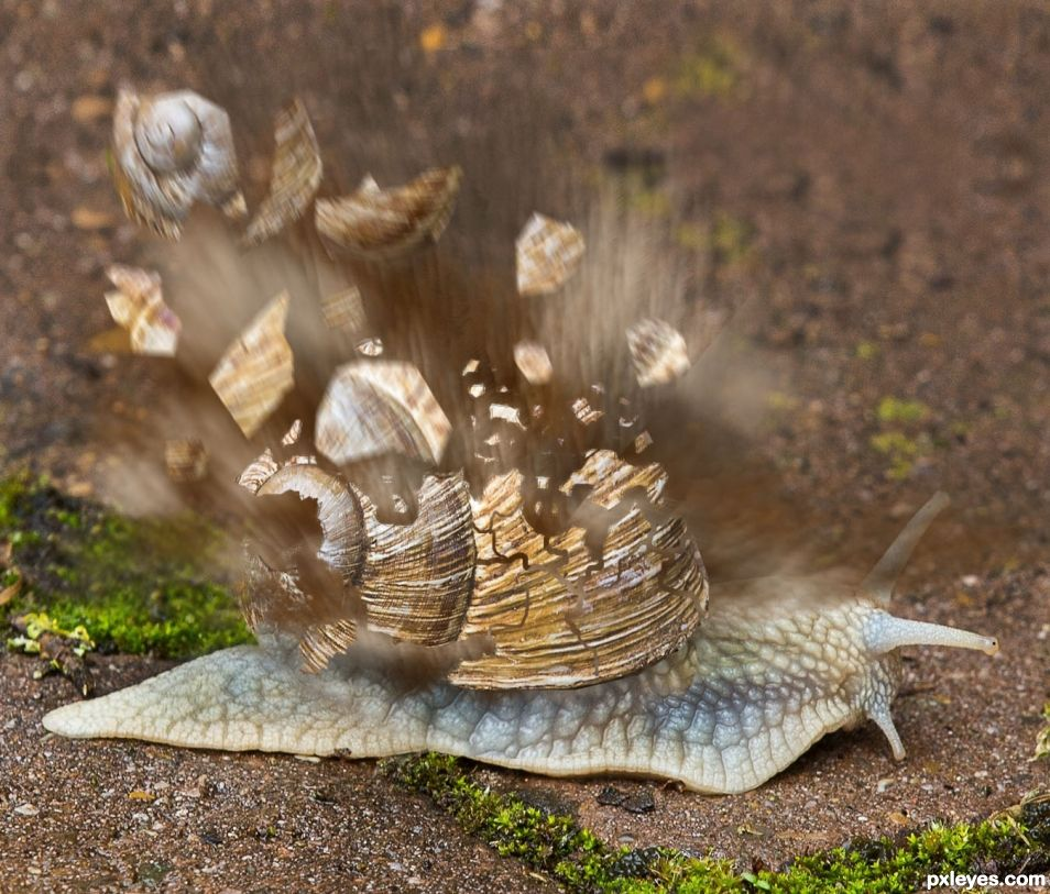 UUUPPPSSS!  THERE GOES THE SHELL