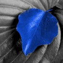 blue is the color photography contest