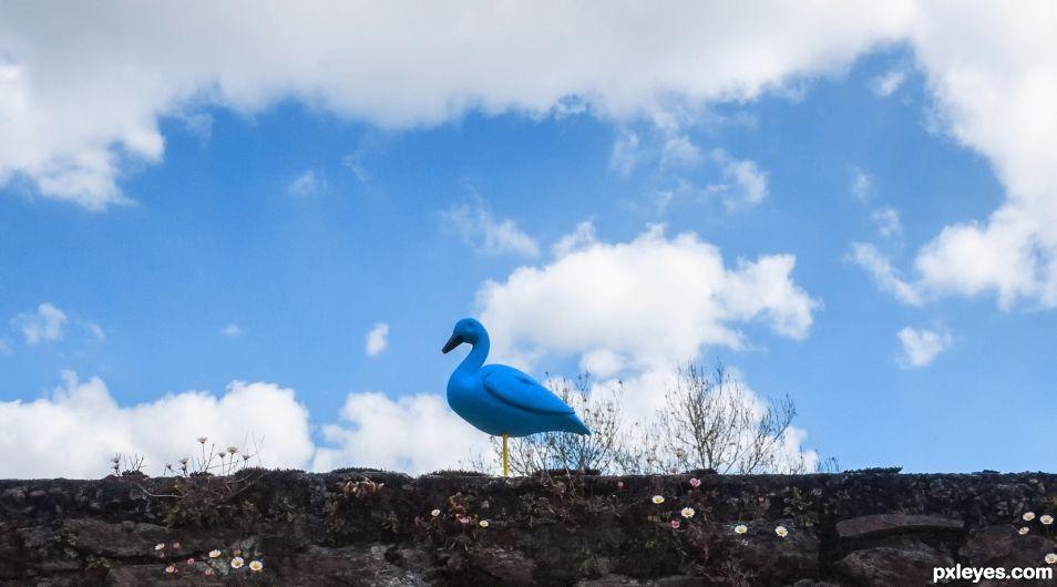 I head the bluebird sing