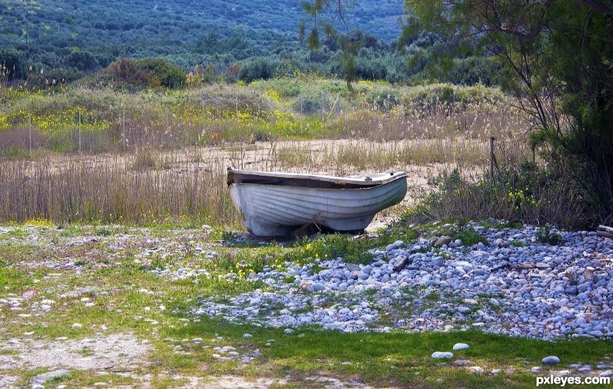 Roa boat grazing