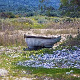 Roaboatgrazing
