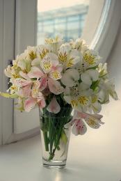 wildorchids