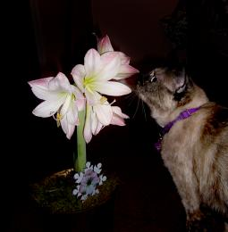 Smellingtheflowers