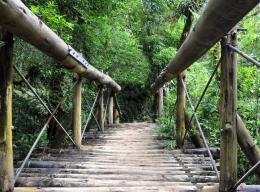 Bridgeintheforest