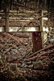 Quiet Walk In The Woods