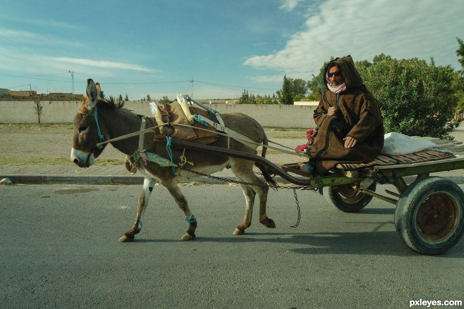 One man,one mule