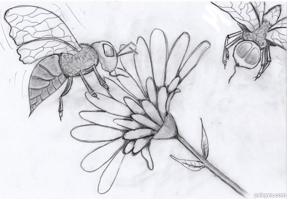 Honey Bees Picture By Heathcliffe For Bugs Life Drawing Contest