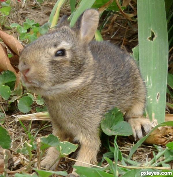 Baggs Bunny