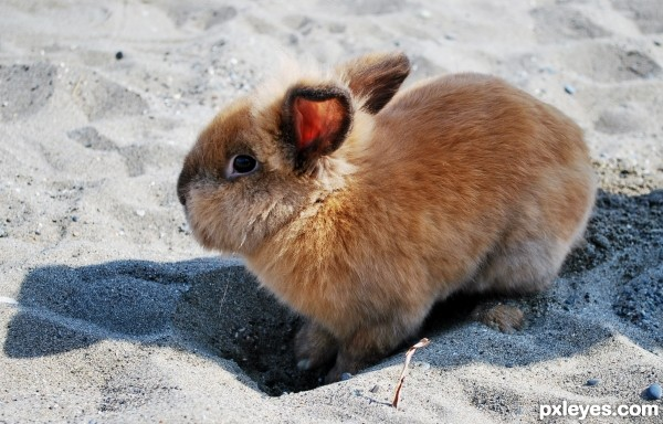 Bunny digging a hole