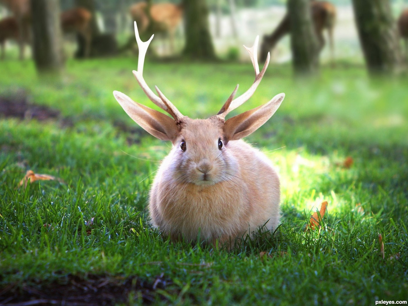 Jackalope picture, by RickLaMesa for: bunny fun photoshop contest ...