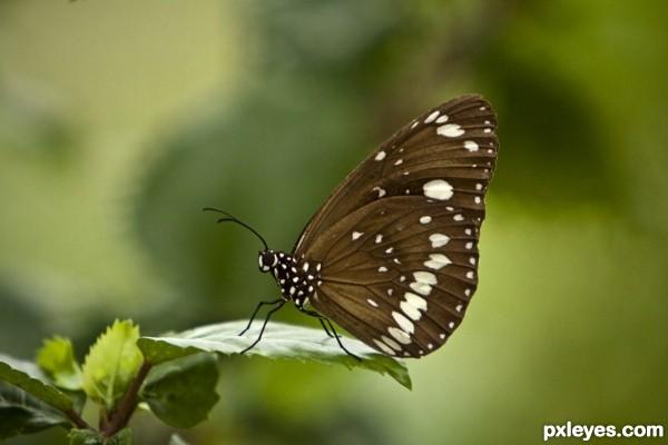 Butterfly Landing Zone