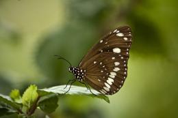 ButterflyLandingZone