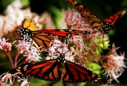 UWantButterflies