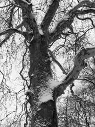 trunk in winter