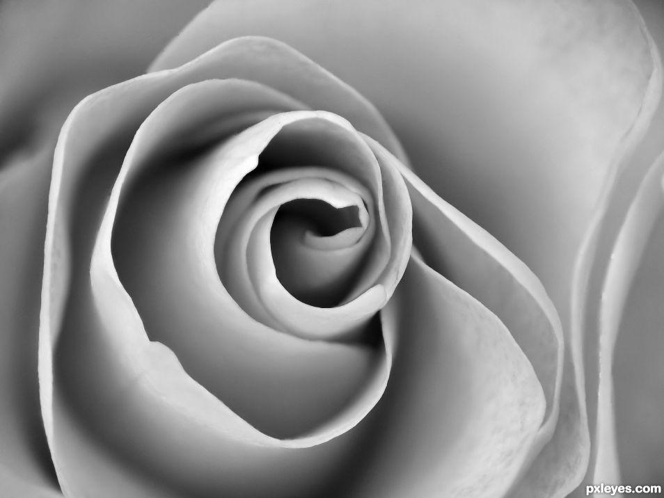Spiral of petals