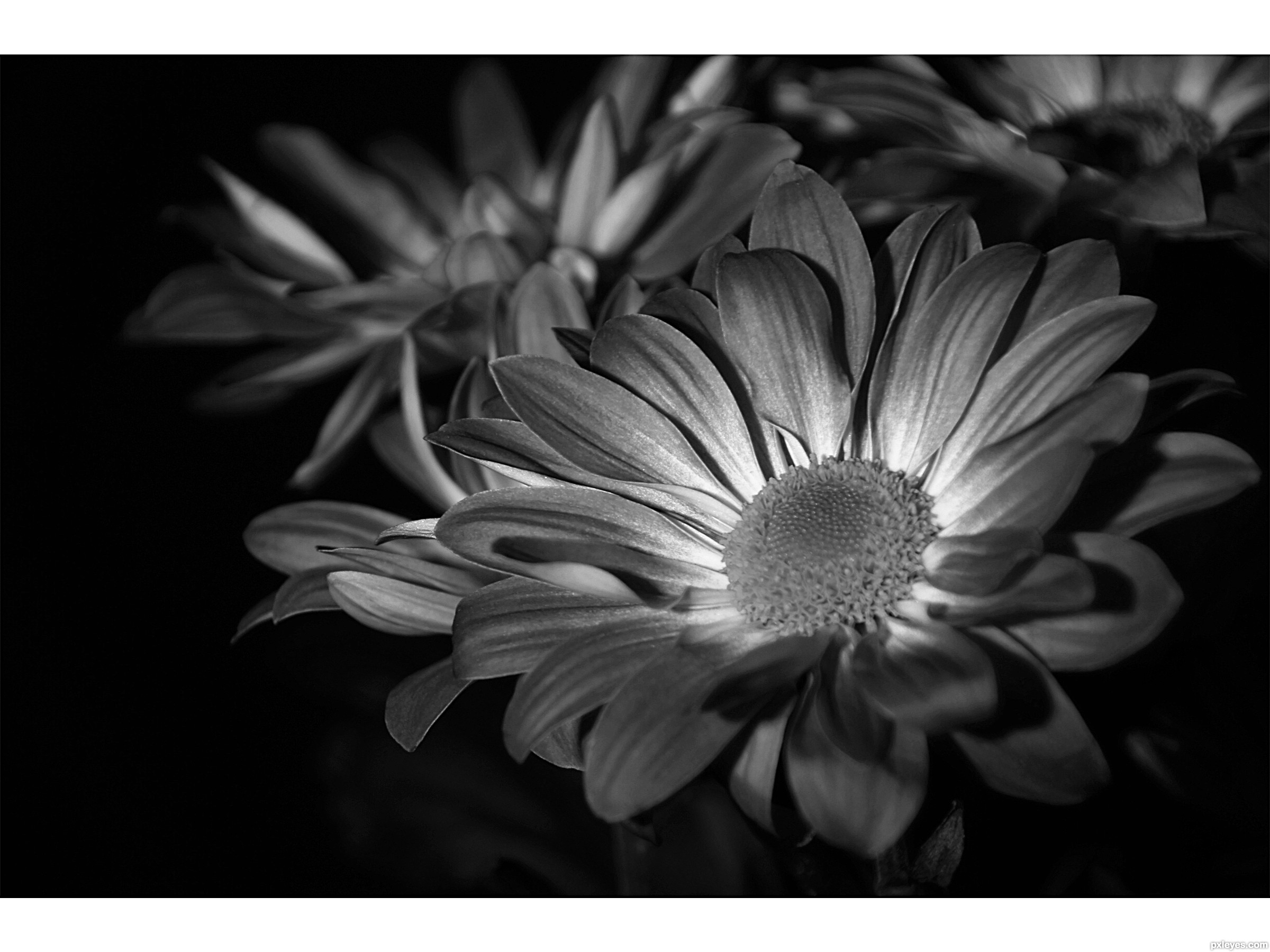 Flowers in black and white picture by lorena99 for bw flowers flowers in black and white mightylinksfo
