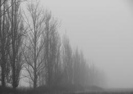 Landscapeinthefog
