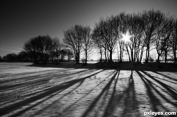 Trees And Shadows Picture  By Wysiwyg For  Bw Landscapes