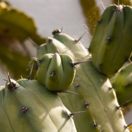 Spinycactus