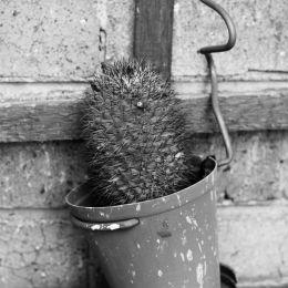 CactusPot