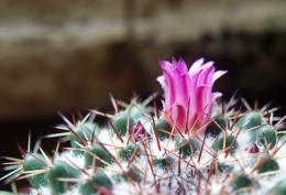 Cactusinbloom