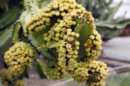 Fruitanyone