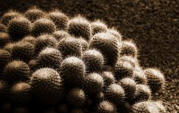 Lemondeentierestuncactus