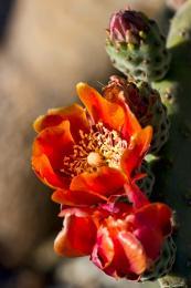 brightcactus