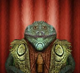 Mr Gator Picture