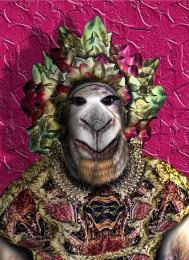 CamelDandy