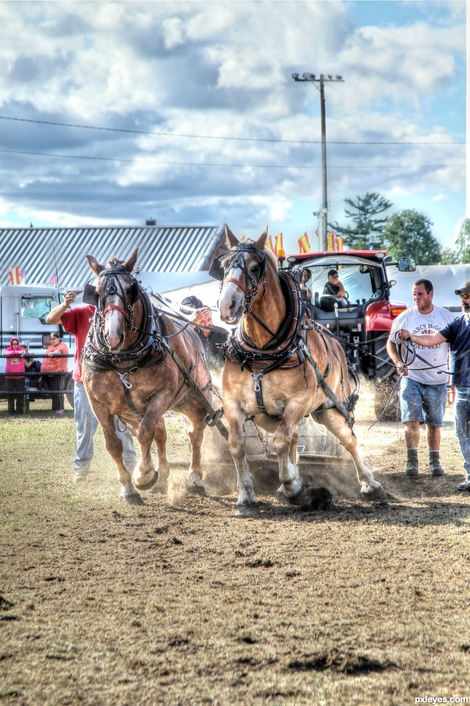 Draft Horse Competition