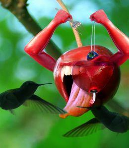 Free Nectar