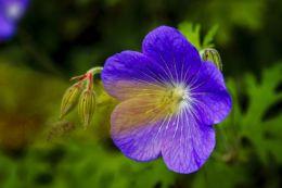 Carnivorous Flower