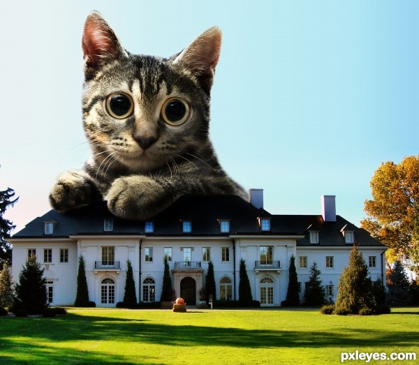 educated cat - photo #15