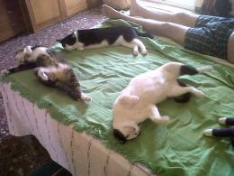 Allsleeping