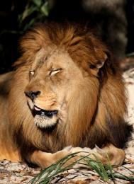 King Nap