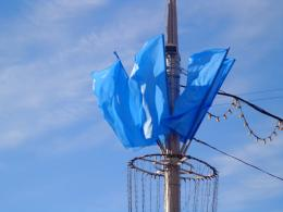 Blue flags