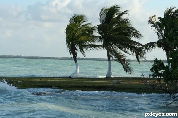 Tropical wind