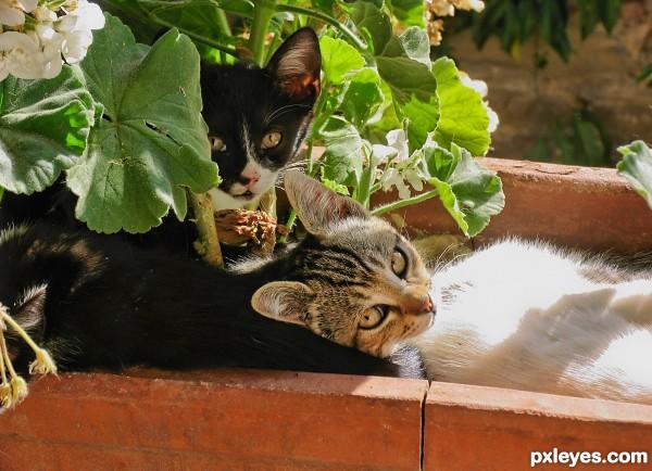 Kittens in a sunny spot