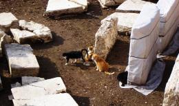 Archeologists