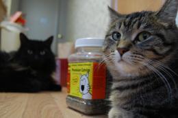 gravitation to the catnip