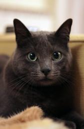 Cat. Picture