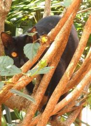 Pantherwannabe