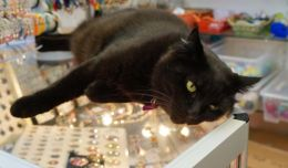 Black cat in the jewelry store