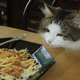 HedkillforSpaghetti
