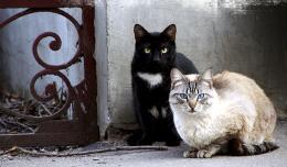 Catguard